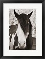 Pale Eyed Stallion Fine Art Print