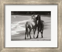 Young Mustangs on Beach Fine Art Print