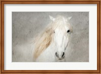 Stallion Face Fine Art Print