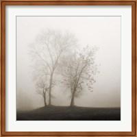 Four Trees in Fog Fine Art Print
