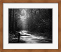 Tremont Road, Smoky Mountains Fine Art Print