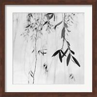 Willow Print No. 3 Fine Art Print