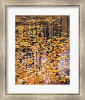 Autumn Detail Fine Art Print