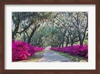 Azaleas, Bonaventure Fine Art Print