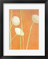 Cream Flowers on Orange Fine Art Print