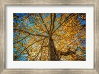 Fall Tree Fine Art Print