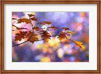 United Colors of Autumn Fine Art Print