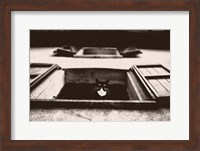 Dali the Cat Fine Art Print