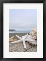 Crescent Beach Shells 14 Fine Art Print