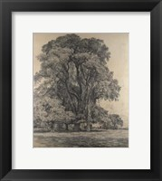 Elm trees in Old Hall Park Fine Art Print