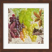 Vintage Fruits II Grapes Fine Art Print