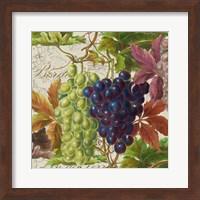 Vintage Fruits III Grapes Fine Art Print