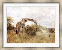 Golden Savanna Giraffe Fine Art Print