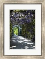 Wisteria Arbor In Garden, Austria, Vienna, Schonbrunn Palace Fine Art Print