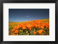Poppies Spring Bloom 3. Lancaster, CA Fine Art Print