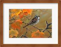 Whitethroated Sparrow Fine Art Print