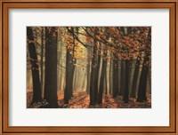 Bunch of Trees Fine Art Print