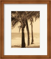 Palm Beach II Fine Art Print