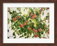 Apple Tree Fine Art Print