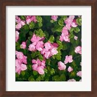 Azaleas Fine Art Print