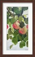 Apple Tree Branch Fine Art Print