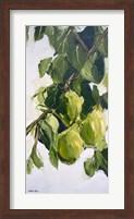 Pear Tree Branch Fine Art Print