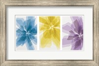 Three X-Ray Flowers Fine Art Print