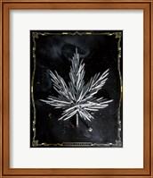 Carpe Cannabis Fine Art Print