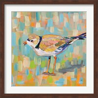 Coastal Plover IV Fine Art Print