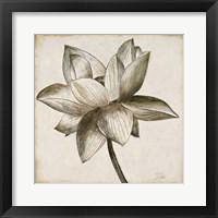 Sepia Lotus I Fine Art Print