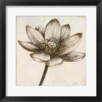 Sepia Lotus II Fine Art Print