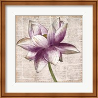 Defined Lotus I Fine Art Print