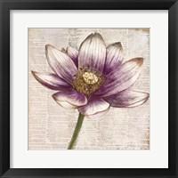 Defined Lotus II Fine Art Print