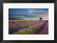 France, Provence, Valensole Plateau Lavender Rows And Farmhouse Fine Art Print
