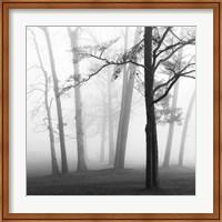 Ethereal Trees Fine Art Print