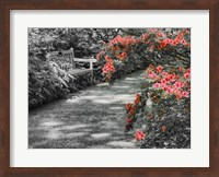 Delaware, Walkway In A Garden With Azaleas And A Park Bench Fine Art Print