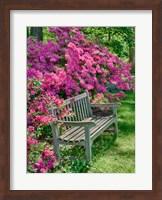 Delaware, A Dedication Bench Surrounded By Azaleas In A Garden Fine Art Print