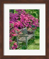 Delaware, A Dedication Bench Surrounded By Azaleas In A Garden Fine Art Print