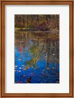 Fall Foliage Reflection In Lake Water Fine Art Print