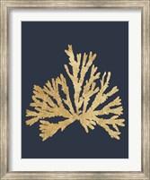 Pacific Sea Mosses IV Indigo Fine Art Print