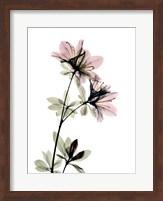 Azalea Fine Art Print