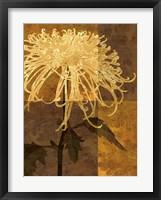 Golden Mums I Fine Art Print