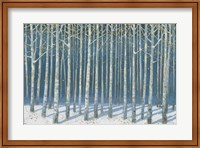 Shimmering Birches Fine Art Print