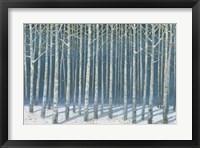 Shimmering Birches Fine Art Print