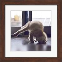 Cat Yoga X Fine Art Print