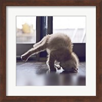 Cat Yoga X Fine Art Print