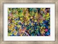 Aerial Fall Trees Fine Art Print