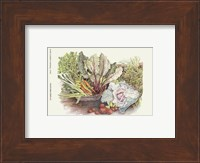 Vegetable Display Fine Art Print