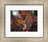 Leopards Fine Art Print