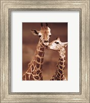 Giraffe First Love Fine Art Print